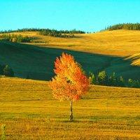 Осень в Сибири :: Милешкин Владимир Алексеевич