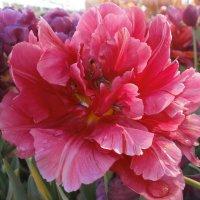 выставка цветов :: Виктория Семенова