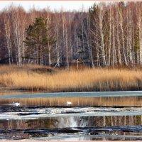 Пробуждение природы :: Геннадий Ячменев