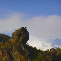 Горная перепёлка рано утром  на скалах Эльбруса. Высота 2500 м. :: Vladimir 070549