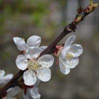 Весна :: Валентина Дмитровская