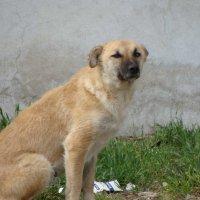 Уличная собака :: Gudret Aghayev