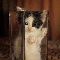 Котёнок в вазе. :: Евгеша Сафронова