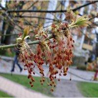 Цветочки. :: Валерия Комова