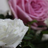 Белая роза... :: Mariya laimite