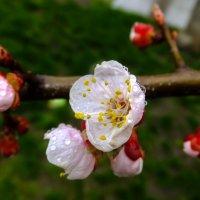 Цвет 15 апреля... :: Олег Петрушин