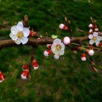 Цвет 15 апреля...... :: Олег Петрушин