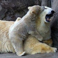 зоопарк :: Михаил Бибичков
