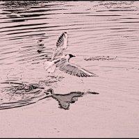 Чайка :: Борис Гуревич