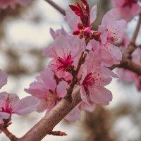 весна :: Ирина Панкова