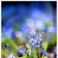 ароматы леса :: Евгения Шаталова