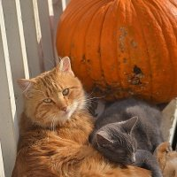 Pumpkin :: Юлия Шмакова