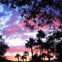 palm trees :: Наталья Лев