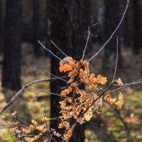 Свет и лес :: Василий Гущин
