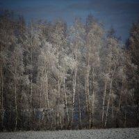 Белый, серебристый снег в апреле. :: Людмила Ларина