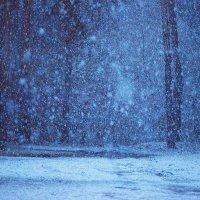 Снегопад в апреле :: Елена Васильева
