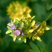 Цветок полевой(мимикрия) :: Valeriy(Валерий) Сергиенко