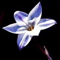 Шестиконечная звёздочка :: Alexander Andronik