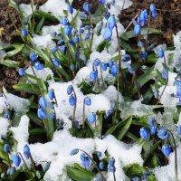 Снег на цветах . :: Александр