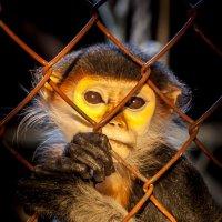 Все хотят быть свободными. :: Oleg Gendelman