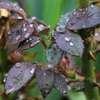 Жемчуг дождя :: Виктор Масальский