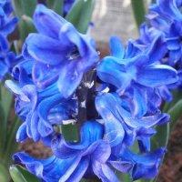 цветы :: Виктория Семенова