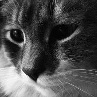 Эти грустные глаза :: Валерия Белошицкая