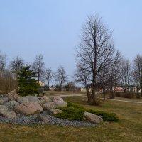 Весна в парке. :: zoja