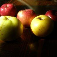 Курские яблочки. :: Ирина Королева