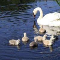 Семейство на озере. :: Лев Колтыпин