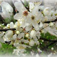 Весенний налив :: Сергей Карачин
