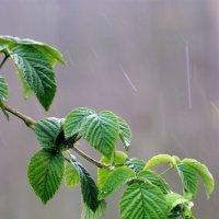 Когда идет дождь.... :: Сергей -