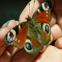 Fly Away :: Maggie Aidan