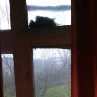 Голубка на окне - добрый знак. :: Наталья (ShadeNataly) Мельник