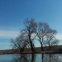 Река и дерево :: Александра