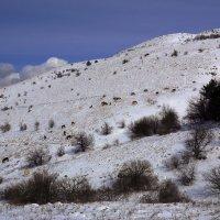 Склоны северного Демерджи :: Михаил Баевский