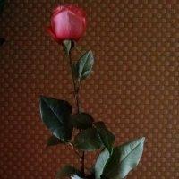 Гордое одиночество.. :: Kira Martin