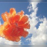 Ангельский цветок :: Luis-Ogonek *