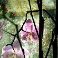 Orchid :: Катерина Чебышева