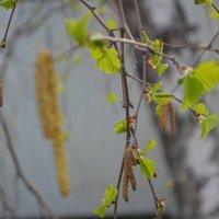 Весна :: Ирина Сазонова