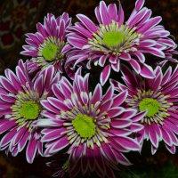 Цветы. :: zoja