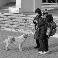 ...Что же нам, Бобик, с тобой делать? :: Ольга Нарышкова