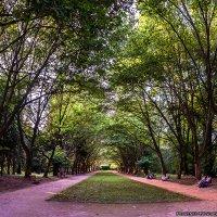 Стрыйский парк - Львов (панорама из 6 фото) :: Богдан Петренко