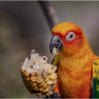 Не мешайте мне кушать...Парк птиц,Куала-Лумпур.Малайзия. :: Александр Вивчарик