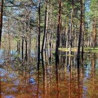 Под водою спрятались поляны... :: Лесо-Вед (Баранов)