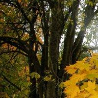 Осеннье листья :: Наталья Лунева