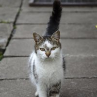 кошка :: Дмитрий Крупица