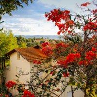 Дом в обрамлении красных цветов :: Ольга