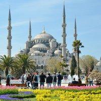 Голубая мечеть. :: Анастасия Смирнова