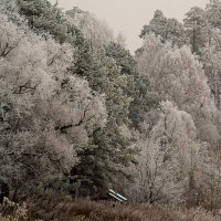 Зима :: Евгений Мамаев